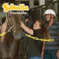 Träningsgrupp  Vuxen- Träna Travhäst|HT 17